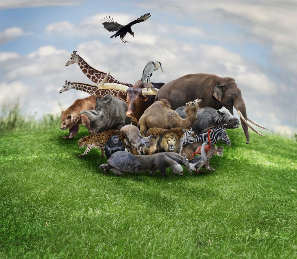 Bald geht es tierisch zu im Kinderzimmer...