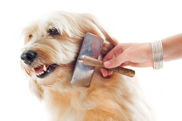 Hund im Alter pflegen