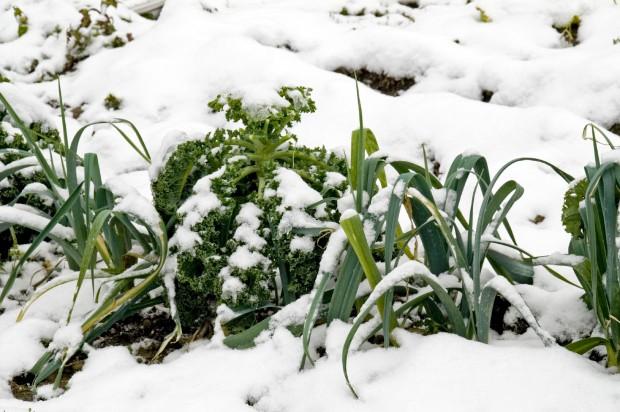 Schnee auf Pflanzen