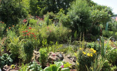 Gartenteich 2