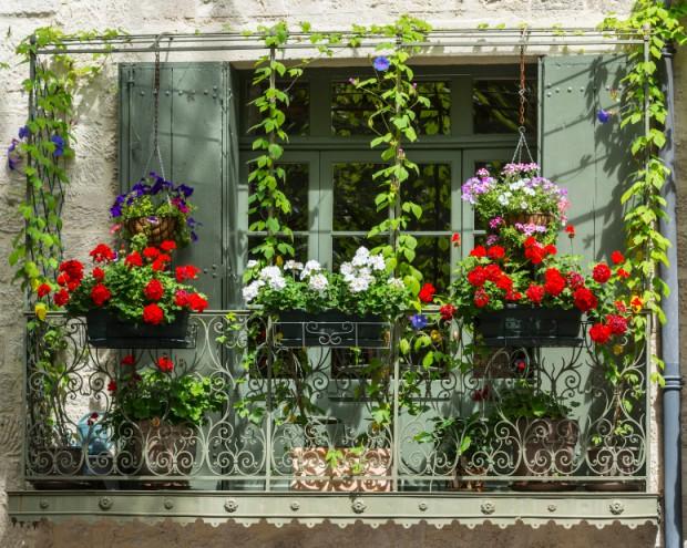 Beeren Für Den Balkon! Wir Zeigen Euch, Welche Ideal Sind