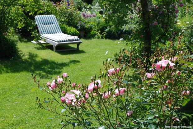 Liegestuhl  auf Rasen und Rose Bonica 82
