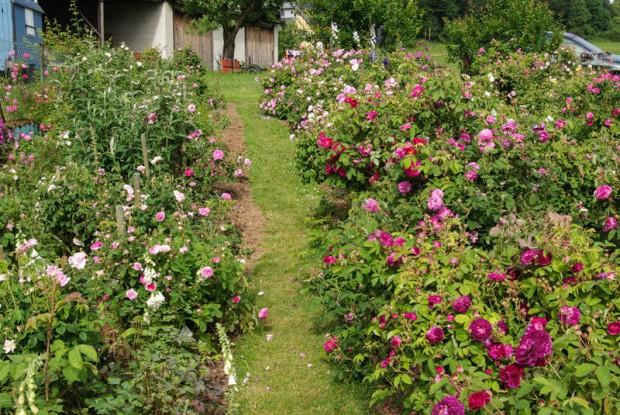 Rosengarten mit über 350 Rosenarten