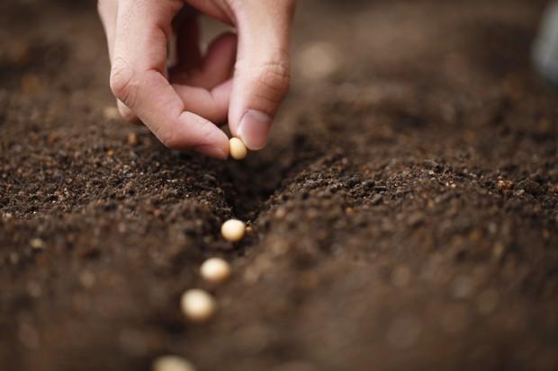 Samen einpflanzen