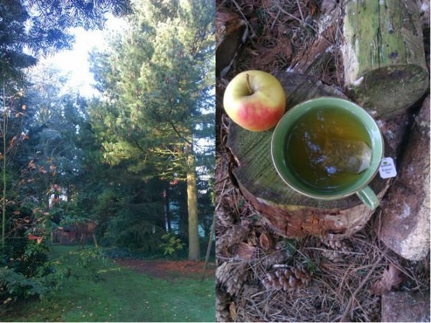 Nadelbäume, Apfel und Teetasse im Herbst