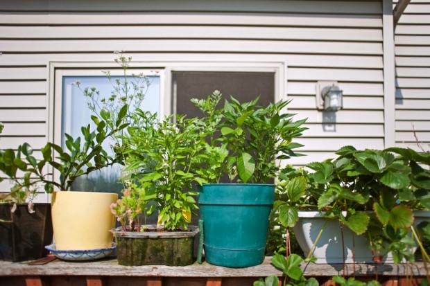 Topfpflanzen auf Balkon