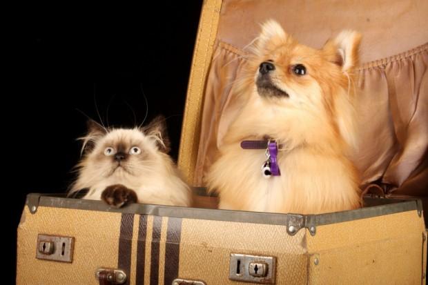 Wohin-mit-Katze-und-Hund-im-Urlaub