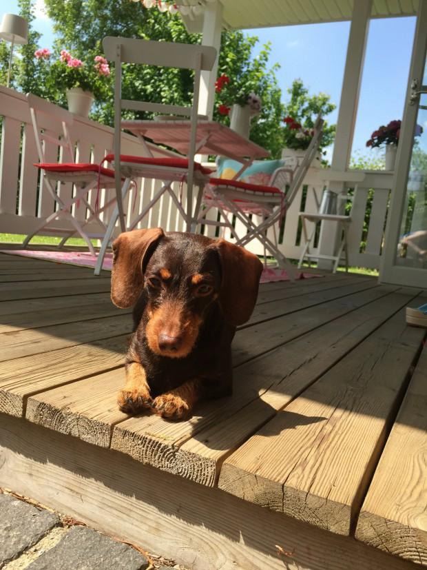 Wilma Hund