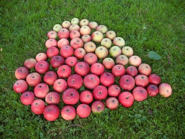 Natürlich herzlich – Heikes Apfeldeko.