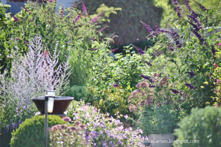 Pflanzenreichtum im Garten