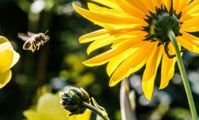Schutz vor Insekten im Garten