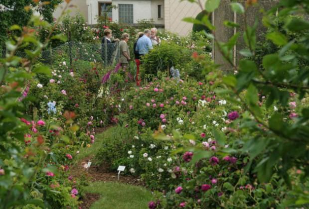 Rosengarten Besucher