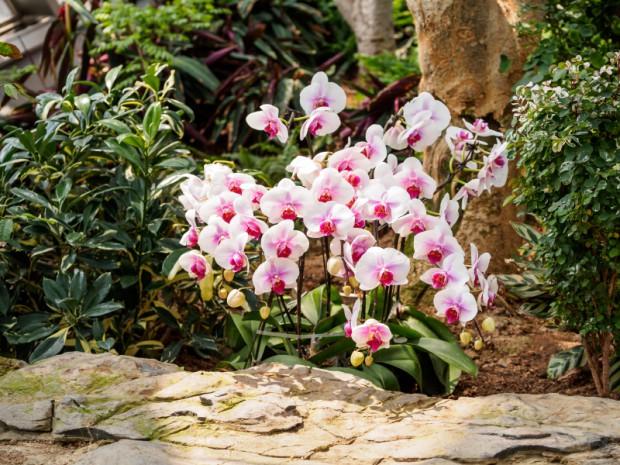 orchideen f r den garten pflanz und pflegetipps. Black Bedroom Furniture Sets. Home Design Ideas
