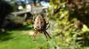 Artenvielfalt_Spinne