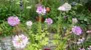 August Garten 11 1000