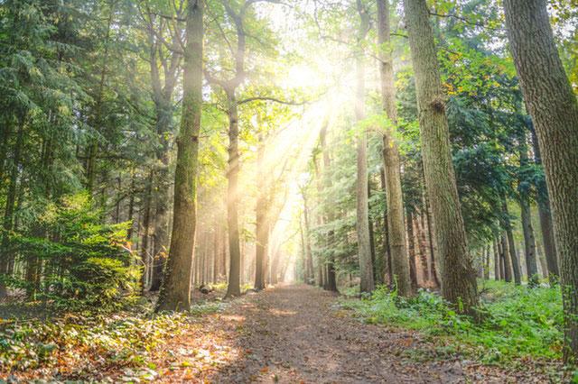 Zecken im Wald