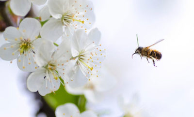 10 Tipps für Bienen im Garten oder Balkon