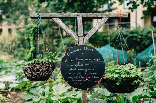 Garten anpflanzen Kräuter