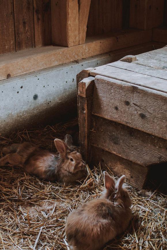 Artgerechte Haltung Kaninchen