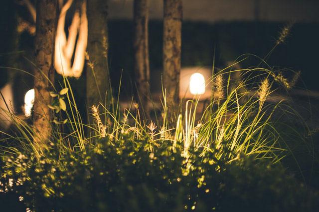 Beleuchtung grünes Paradies