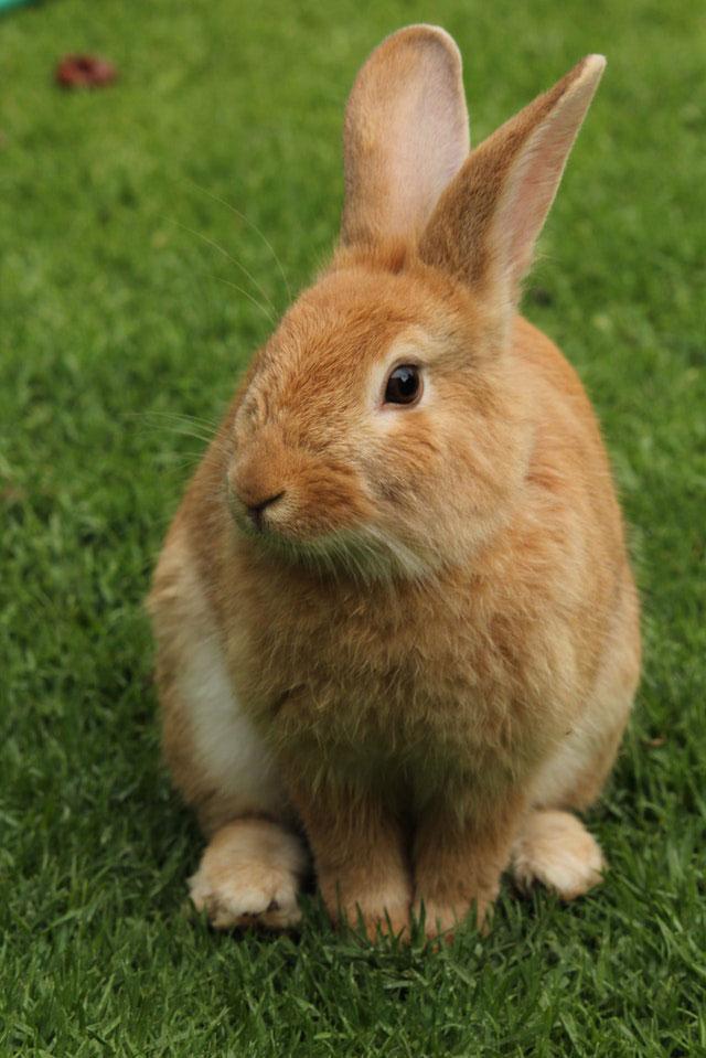 Kaninchen gesund bleiben