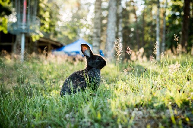Kaninchen Krankheiten Erkennungsmerkmale