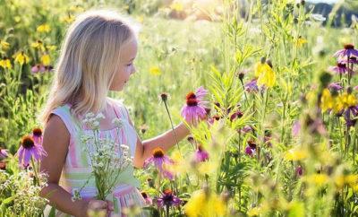 Naturnahen Garten anlegen