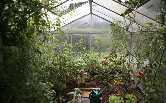 Gemüse im Gewächshaus anpflanzen