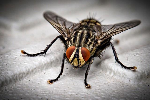 Fliege im Schlafzimmer