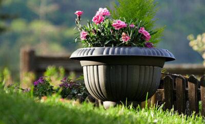Orte überwintern Pflanzen