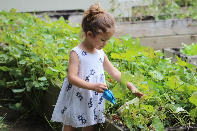 Grundlagen Urban Gardening