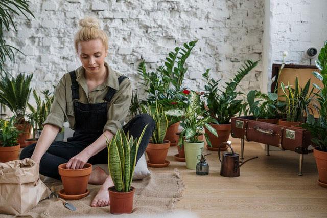 Urban Gardening Stadt