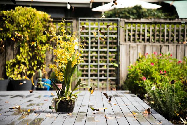 Holz WPC Vergleich Terrasse